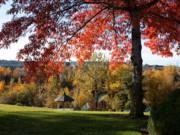 Gonzaga With Autumn Tree Canopy Print by Carol Groenen