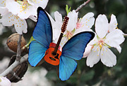 Blue Butterfly - Good Morning Rock by Eric Kempson