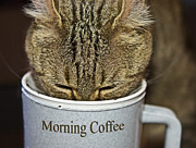 Coffee Cup Animal Posters - Good Morning Poster by Susan Leggett