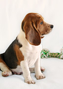 Soft Puppy Posters - Good ol Snoopy Poster by Christine Till