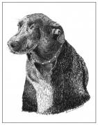 Drawings Of Dogs Framed Prints - Good old Charlie Framed Print by Jack Pumphrey