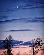 Crescent Moon Photos - Goodnight Moon by Lisa Russo