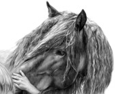 Horse Drawings Metal Prints - Goodwill and Harmony Metal Print by Sheona Hamilton-Grant