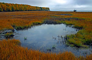 Ron Day - Goose Bay Wetlands