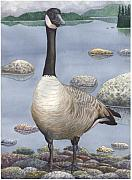 Canada Paintings - Goose by Catherine G McElroy