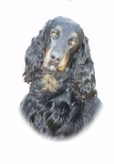 Gordon Setter Prints - Gordon Setter - Poe Print by Larry Matthews