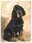 Gordon Setter Puppy Framed Prints - Gordon Setter Pup Framed Print by Maxine Bochnia