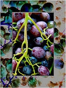Bunch Of Grapes Framed Prints - Gorgeous Bunch of Grapes Framed Print by John Maloof