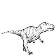 Likeness Drawings Prints - Gorgosaurus - Dinosaur Print by Karl Addison