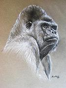 Black And White Pastels Posters - Gorilla Poster by Anastasis  Anastasi