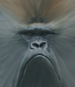 Apes Framed Prints - Gorilla Freehand abstract Framed Print by Ernie Echols
