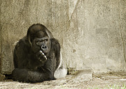 Rustic Scenes Prints - Gorilla in Thought Print by Melany Sarafis