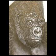 Animal Art Prints - Gorilla Print by John Shook