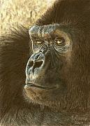 Featured Drawings Prints - Gorilla Print by Marlene Piccolin