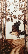 Hawk Pyrography - Goshawk by Susan Rice