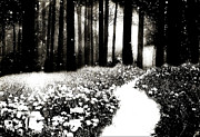 Haunting Woodlands Posters - Gothic Dark Black White Surreal Woodlands Poster by Kathy Fornal