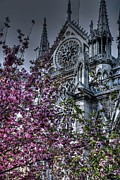 Gothic Cathedral Posters - Gothic Paris Poster by Jennifer Lyon