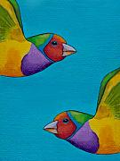 Robert Lacy Posters - Gouldian Finches Poster by Robert Lacy