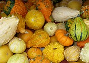 Fall Cards Prints - Gourds Galore Print by Carol Groenen