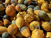 Sandy Collier - Gourds Galore