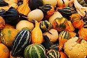 Gourds Print by Jame Hayes