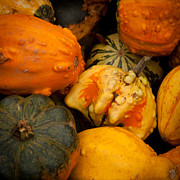 Harvest Art Prints - Gourds  Print by Matt Dobson