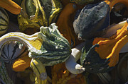 Scott Evers - Gourds No.1
