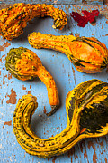 Yellows Prints - Gourds on wooden blue board Print by Garry Gay