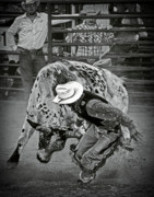 Bull Rider Prints - Grabbin The Bull By The Horns Print by Ron  McGinnis