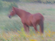 Pastureland Painting Posters - Grace In The Meadow Poster by Debra     Vatalaro