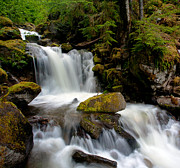 North Cascades Prints - Graceful Steps Print by Mike Reid