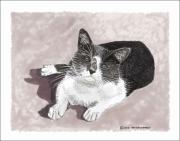 Pets Art Drawings Prints - Gracie Jacks cat now Print by Jack Pumphrey