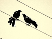 Bird On A Wire Prints - Grack Pecked Print by Joe JAKE Pratt