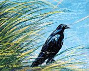 Crows Pastels - Grackle by Jan Amiss