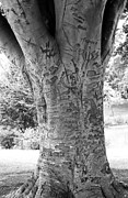 Neurotic Images Photography Prints - Graffiti Tree Cropped Print by Chalet Roome-Rigdon
