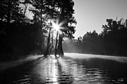 Louisiana Swamp Prints - Grand Bayou Morning Print by Scott Pellegrin