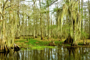 Louisiana Swamp Photos - Grand Bayou Swamp by Scott Pellegrin
