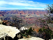 Natural Forces Originals - Grand Canyon 4 by Tanya  Searcy