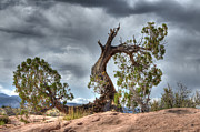 Lone Tree Prints - Grand Canyon Facing The Storm Print by Bob Christopher