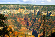 Bianca Collins - Grand Canyon North Rim 1