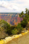 Bianca Collins - Grand Canyon North Rim 4