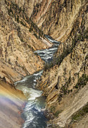 The Grand Canyon Of The Yellowstone Framed Prints - Grand Canyon of the Yellowstone and Rainbow Framed Print by Greg Nyquist