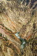 The Grand Canyon Of The Yellowstone Framed Prints - Grand Canyon of the Yellowstone Framed Print by Greg Nyquist