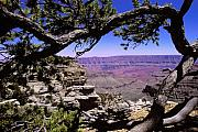 Grand Canyon Photo Originals - Grand Canyon thru Pine by Alan Lenk