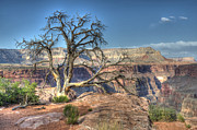 Light And Shadow Art - Grand Canyon Tree At Toroweap by Bob Christopher