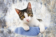 Kittens Digital Art Prints - Grand Kitty Cuteness 2 Print by Andee Photography