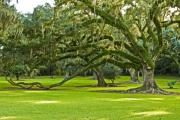 Spanish Moss Photos - Grand Lady by Scott Pellegrin