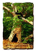 Ranch Pyrography Acrylic Prints - Grand Old Sycamore Tree Ahmanson Ranch Calabasas Acrylic Print by Karl Preston