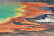 Yellowstone National Park Framed Prints - Grand Prismatic Spring Runoff Framed Print by Photo by Mark Willocks