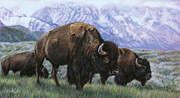 Buffalo Pastels Posters - Grand Teton Bison Poster by Deb LaFogg-Docherty